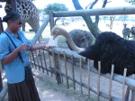 Feeding the ostriches in Joburg (DAY 2)